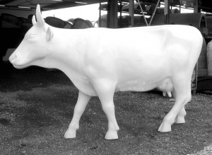 Kuh  stehend